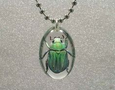Beautiful Insect jewelry