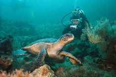 scuba- galapagos islands ecuador, charles darwin, travel tips, scuba diving, childhood, galapagos islands, place, underwater world, sea turtles