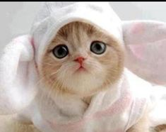 Cute kitten bunny!