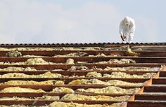 How To Avoid Air Pollution In the course of Asbestos Elimination