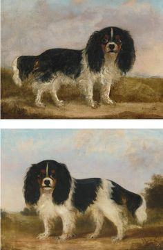 Collection of Brooke Astor -  English School, 19th Century KING CHARLES SPANIELS: A PAIR OF PORTRAITS -   indistinctly signed and dated 185- lower right and lower left respectively  oil on canvas  each: 14 by 18 in. 35.1 by 45.8 cm
