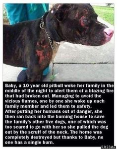 A dog called Baby