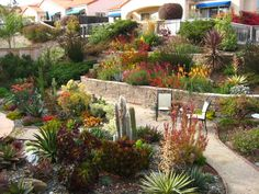 Tiered Drought-Tolerant Pismo Beach Landscape - contemporary. Could it be any more gorgeous?!