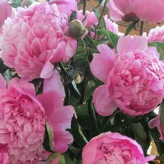 Cvjećarstvo - odlična internet stranica -  floriculture