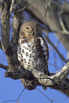 Owl by Mark Williams Photographer