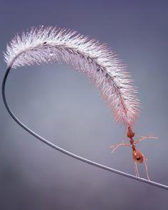 Acrobatical Ant by Fauzan Maududdin