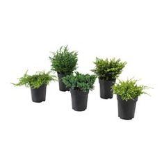 Planten & potten | Aankleding van tuin & balkon - IKEA