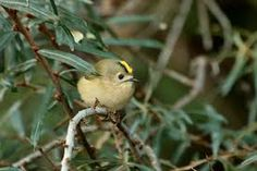 Znalezione obrazy dla zapytania ptaki Europy na Pinterest