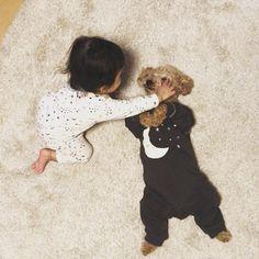 ゆずちゃんとトイプードルのこっちゃんは、一緒に寝るのが大好き。 Sleeping Dogs, Poodle, Cute Puppies, Cute Animals, Friends, Pretty Animals, Amigos, Poodles, Cutest Animals