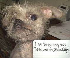 """I am Nosey, very nosey.I also pee on plastic bags."""