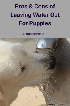 If there's a dog, there's at least one bowl of water in the house. Is it really necessary to leave water out for puppies though! #puppycare #puppyhealth #dogsneedwater Dog Health Tips, Dog Health Care, Pet Sitters International, Dog Pee, Group Of Dogs, Cute Dog Photos, Dog Games, Pet Costumes, Dog Feeding