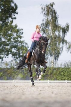 Rio has such a beautiful canter. He has such a uphill canter.~cecelia