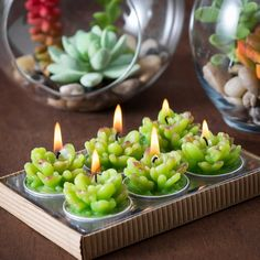 Add a quirky touch to your d?cor with this range of cute Cactus Candles. They are sold either in beautiful gift sets of 6 tealights. Each beautiful set features 6 cactus-shaped candles. Cactus candles are safe, stylish and self-contained. Floating Candles, White Candles, Tea Light Candles, Tea Lights, Cactus Gifts, Buy Cactus, Wooden Candle Holders, Candle Jars, Cactus Candles