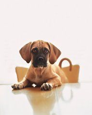 DIY Home Remedies for Your Pet | Pets - Yahoo! Shine