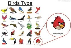 bird types Birds Type