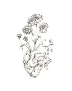 trendy ideas for illustration art heart tattoo ideas Anatomy Art, Heart Anatomy Drawing, Heart Anatomy Tattoo, Future Tattoos, Skin Art, Art Inspo, Cool Art, Art Photography, Artsy