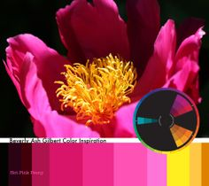 Color Inspiration, Hot Pink Peony, Pink, Orange, Yellow, Split Complementary, Color Palette
