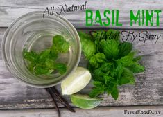All Natural Basil Mint Herbal Fly Spray
