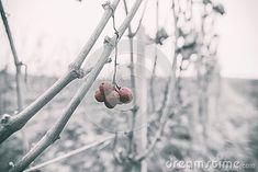 autumn-landscape-grapes-harvested-grapes-withering Nature Photos, Harvest, Autumn, Landscape, Fall, Scenery, Landscape Paintings, Corner Landscaping