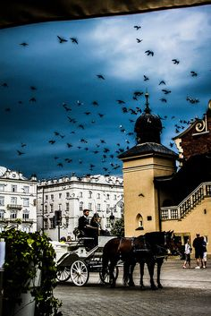 Pigeons circling over the square, Krakow, Poland
