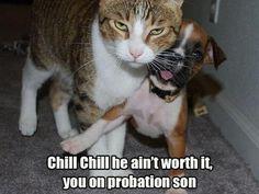 Kitty's mad.