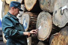 Picture of man inspecting timber