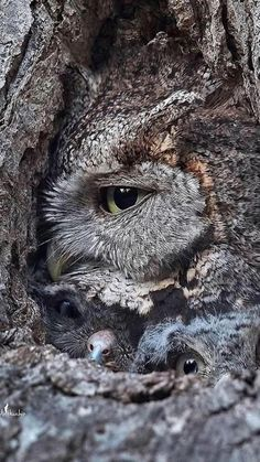Baby Animals, Cute Animals, Beautiful Owl, Owl City, Bird Feathers, Art Reference, Camouflage, Birds, Nature