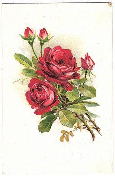 Vintage postcard roses