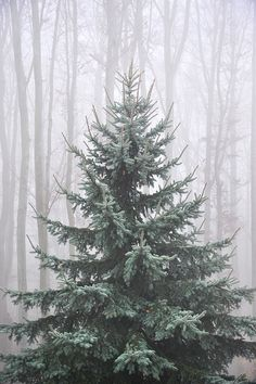 The perfect Christmas tree! All it needs are the decorations and lights...
