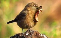#Wild sparrow