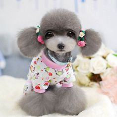 Everything about dogs Cute Dog Photos, Dog Pictures, Cute Pictures, Unusual Animals, Cute Animals, I Love Dogs, Cute Dogs, Asian Dogs, Dog Haircuts