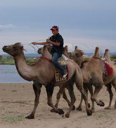 Camel convoy Mongolia