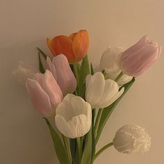 Tulips, Skate, Florals, Mary, Logo, Flower, Plants, Ideas, Backgrounds