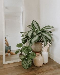 Plant Aesthetic, Aesthetic Room Decor, Room Ideas Bedroom, Bedroom Decor, Cosy Bedroom, Decor Room, Wall Decor, Chinese Evergreen Plant, House Plants Decor