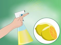 3 Ways to Make Homemade Cat Repellent - wikiHow - How to keep cats out of the garden safely