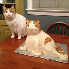 But bigger cats make for bigger cakes.