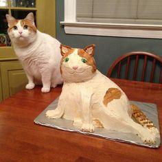 But bigger cats make for bigger cakes.