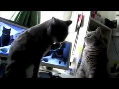Talking Cats Play Pattycake--probably one of the most hilarious things I've ever seen OMG the guys' narrating is PERFECT!! from some awesome high school ministry. anyways, IT IS EPIC. LOL!!
