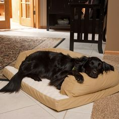 $49.99 The Beasleys Couch Dog Bed comes with a cotton-poly blend cover that is removable for easy washing. The bolster is filled with a Hypro-Loft fiber- a blend of exclusive virgin and recycled fibers- and is resistant to shifting and matting to keep its shape. The bottom is made of thick, 3-inch convoluted foam with a Sherpa cover. Choose from the following sizes:  25L x 20W in., 33L x 25W in., 40L x 30W in., 54L x 34W in.