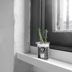 The Minimalist Home x Beaker cacti