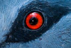 Pigeon's eye. #Macro_Photography