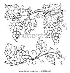 Grape branches  isolated on white background. Line sketch. Hand drawn vector illustration.
