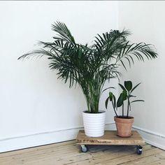 Plants on Wheels