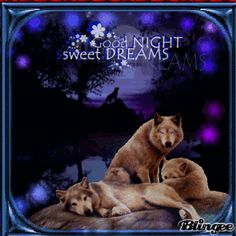 good nite wolves | good night wolf's Picture #131649777 | Blingee.com