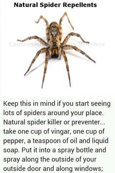 Spider, Scorpion, Fleas, Ticks, Flies and Roach Repellent Recipes