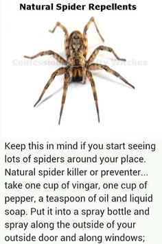 Natural Spider Repellant - will have to try this! Seems spiders, especially the poisonous kind abound in the winter. The cold drives them in. Now for mouse repellant and roach repellant.