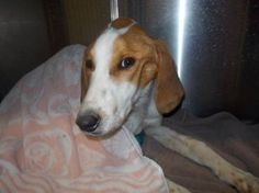 Injured hound fights for his life