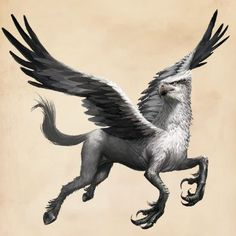 Hypogriph - Phantastic Beasts and Where to Find Them - My list of beautiful animals Harry Potter Drawings, Harry Potter Tattoos, Harry Potter Art, Harry Potter Dragon, Mythical Creatures Art, Mythological Creatures, Fantasy Creatures, Beast Creature, Vampires