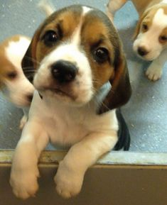 save dogs and cats from animal testing in the UK.