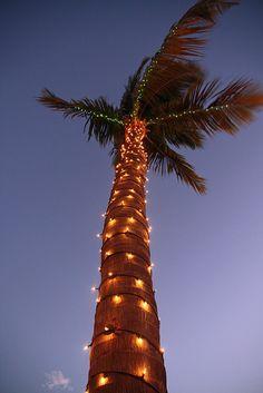 Key West Christmas Palm